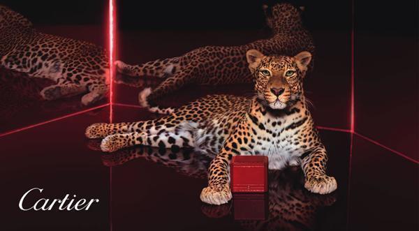 عکس تبلیغاتی شرکت کارتیر